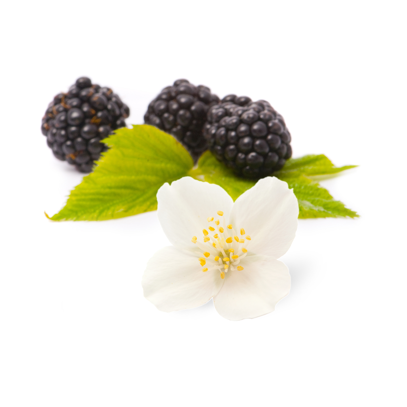 16-blackberry-jasmine-oolong-tea3.jpg_product